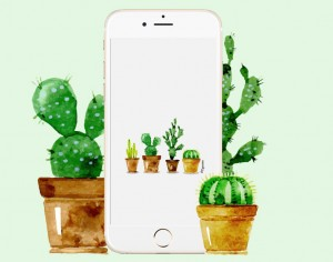 fond-decran-iphone-cactus
