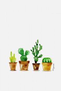 iphone4-lacapuciine-cactus