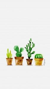 iphone6-lacapuciine-cactus