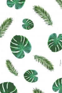 palmier-iphone4-lacapuciine